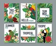 Raccolta di vettore con sei carte, note ed insegne con il tucano, fiori esotici, piante e foglie illustrazione di stock