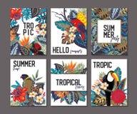Raccolta di vettore con sei carte, note ed insegne con il tucano, fiori esotici, piante e foglie royalty illustrazione gratis