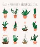 Raccolta di vettore dei succulenti e dei cactus Fotografie Stock