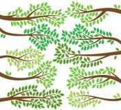 Raccolta di vettore delle siluette frondose del ramo di albero illustrazione di stock