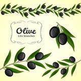 Raccolta di vettore di ramo di ulivo, olive nere Fotografie Stock Libere da Diritti