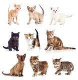 Raccolta differente dei gattini Immagine Stock Libera da Diritti