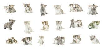 Raccolta differente dei gattini isolata su fondo bianco Immagini Stock Libere da Diritti