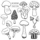 Raccolta disegnata a mano dei funghi Il vettore di scarabocchio ha messo con i funghi del veleno e commestibili Fotografia Stock Libera da Diritti