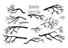 Raccolta disegnata a mano dei rami di albero Immagini Stock