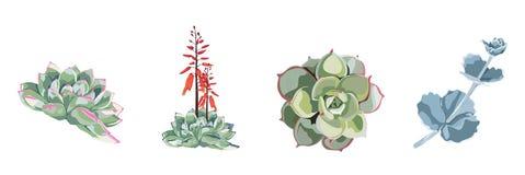 Raccolta disegnata a mano del fiore dell'acquerello succulente della pianta bella, insieme royalty illustrazione gratis