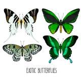 Raccolta esotica delle farfalle Fotografia Stock Libera da Diritti