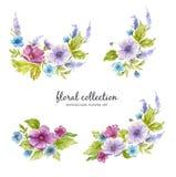 Raccolta floreale dell'acquerello con le disposizioni dei fiori dei fiori, delle foglie, dei rami e dei germogli di fiore illustrazione vettoriale
