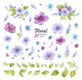 Raccolta floreale dell'acquerello con le disposizioni dei fiori dei fiori, delle foglie, dei rami e dei germogli di fiore illustrazione di stock