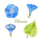 Raccolta floreale dell'acquerello I fiori e le foglie, rami, erbe progettano l'insieme di elementi Vettore disegnato a mano Immagini Stock