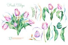 Raccolta floreale della molla delicata con i tulipani, foglie, rami, uova di Pasqua Fotografia Stock