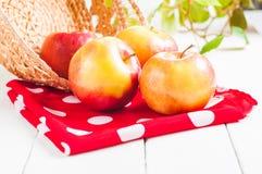 Raccolta fresca delle mele Concetto della frutta della natura Immagini Stock Libere da Diritti