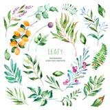 Raccolta frondosa 22 elementi floreali dell'acquerello dipinto a mano Immagini Stock