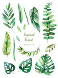Raccolta frondosa tropicale Elementi floreali dell'acquerello dipinto a mano Fotografia Stock