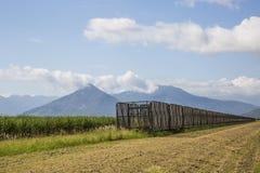 Raccolta i recipienti & del Sugar Cane Fotografie Stock