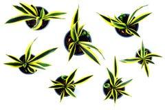 Raccolta isolata della pianta verde su fondo bianco Fotografia Stock