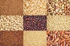 Raccolta libera dei grani del glutine Immagine Stock Libera da Diritti