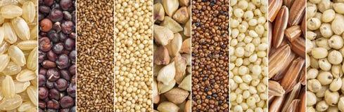 Raccolta libera dei grani del glutine Fotografie Stock Libere da Diritti
