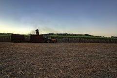 raccolta meccanica del giacimento della canna da zucchero con un raccolto di trasporto del trattore Fotografia Stock