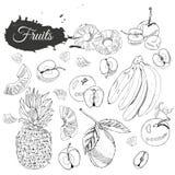 Raccolta monocromatica dei frutti differenti Interi e elemets affettati isolati su fondo bianco Abbozzo disegnato a mano illustrazione di stock