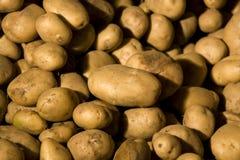 Raccolta organica della patata fotografia stock