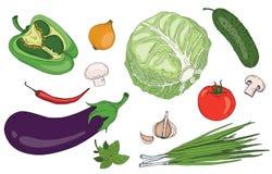 Raccolta organica di vettore di verde fresco della molla delle erbe e delle verdure Fotografie Stock