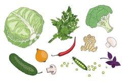 Raccolta organica di vettore di verde fresco della molla delle erbe e delle verdure Fotografie Stock Libere da Diritti