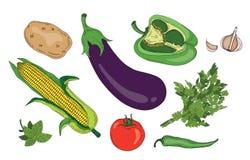 Raccolta organica di vettore di verde fresco della molla delle erbe e delle verdure Fotografia Stock