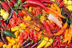 Raccolta piacevole di wow dei peperoncini Immagine Stock