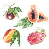 Raccolta realistica dei frutti tropicali botanici Immagine Stock
