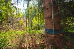 Raccolta residua dell'albero fotografia stock