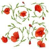 Raccolta rossa degli elementi dell'ornamento del fiore del papavero su bianco Immagine Stock Libera da Diritti