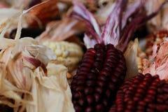 Raccolta rossa del cereale con i semi molto scuri Immagini Stock Libere da Diritti