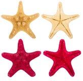 Raccolta rossa e beige delle stelle marine Immagini Stock Libere da Diritti