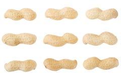 Raccolta secca delle arachidi delle arachidi Immagini Stock Libere da Diritti