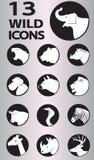 Raccolta selvaggia delle icone Immagini Stock