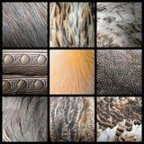 Raccolta selvaggia delle piume di uccelli Immagine Stock
