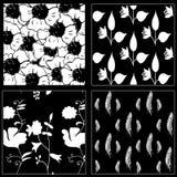 Raccolta senza cuciture del modello di White&Black con i fiori e le piume Immagine Stock Libera da Diritti