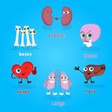 Raccolta stabilita di Vital Anatomical Organs Cartoon Characters royalty illustrazione gratis