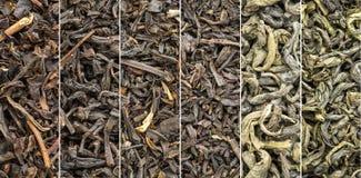 Raccolta storica del tè verde e del nero Fotografia Stock