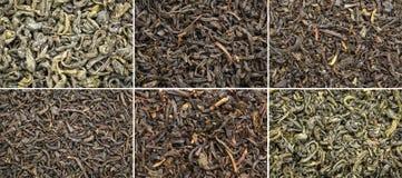 Raccolta storica del tè verde e del nero Immagini Stock