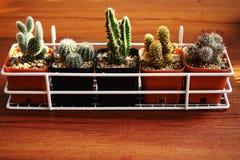 Raccolta succulente delle piante da vaso sul fondo di legno della tavola Immagini Stock