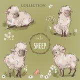 Raccolta sveglia delle pecore illustrazione vettoriale