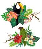 Raccolta tropicale di vettore con i fiori, le foglie e gli uccelli esotici illustrazione di stock