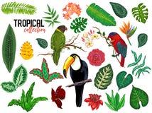 Raccolta tropicale di vettore con i fiori, le foglie e gli uccelli esotici illustrazione vettoriale