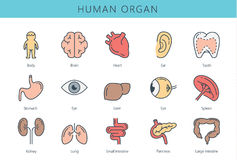 Raccolta umana dell'icona dell'organo interno illustrazione vettoriale
