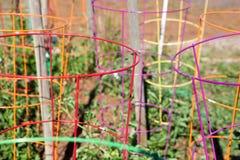Raccolta variopinta delle gabbie del pomodoro Fotografia Stock