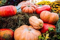 Raccolta variopinta delle zucche sul mercato Fotografie Stock Libere da Diritti