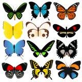 Raccolta variopinta di vettore delle farfalle Fotografia Stock Libera da Diritti