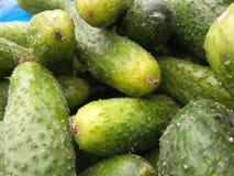 Raccolta verde fresca del cetriolo all'aperto su marke Immagine Stock